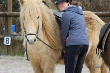 Bjarmi cheval islandais